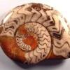 6fssl-ammonite-polished3