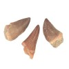 mosasaur-teeth-3